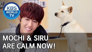 Mochi & Siru are calm now! [Dogs are incredible/ENG/2020.05.27]
