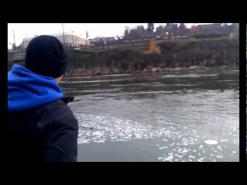 Fishing Giant Sturgeon on the Willamette River in