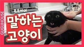 말하는 고양이 목욕시키기!![구구하우스]