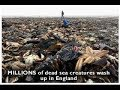2018 Jan-May-MILLIONS DEAD,MASS ANIMAL,MARINE DEATHS.NEW VIDEO.