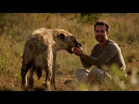 Man plays with Hyena - Animal Odd Couples: Episode 2 Preview - BBC One