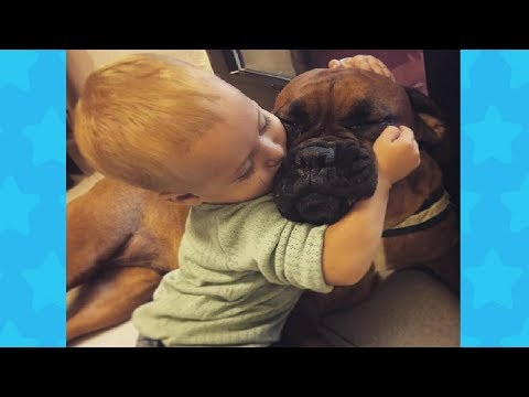 Friendly Boxer Dogs and Babies are good friends | Funny Dog and Baby Video