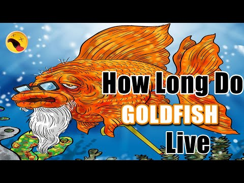 How Long Do Goldfish Live? What Is The Average Lifespan Goldfish