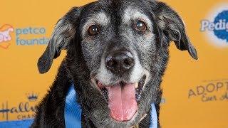 Elderly Pup Left at Kill Shelter Wins Gold at Dog Show