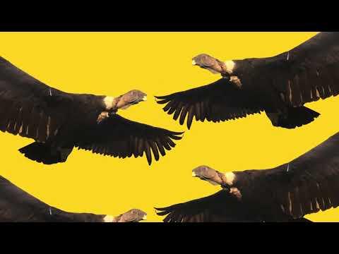 <정의를 위하여> 디지털 싱글 / 21 Nov, 2018