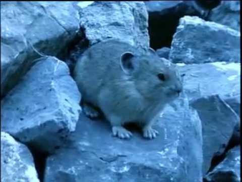 Βραχώδη Όρη (1) Ντοκιμαντέρ για την άγρια φύση.