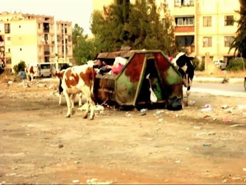 Blida Ouled yaich city