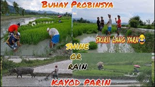 Buhay Probinsya | Pag bunot ng Ponla at Pag tabas  ng Damo