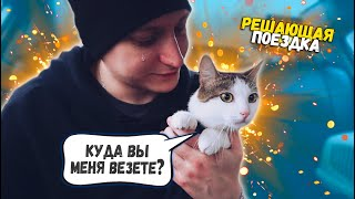 Спасение котика с раной на шее Решающая поездка SANI vlog