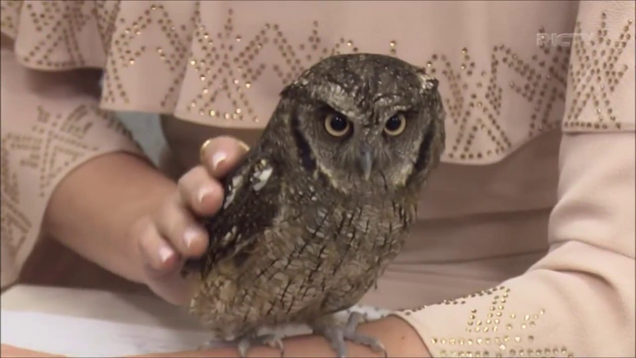 Conheça os cuidados e curiosidades das corujas