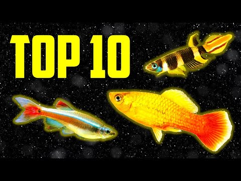 Top 10 Coldwater Fish That Don't Need A Heater