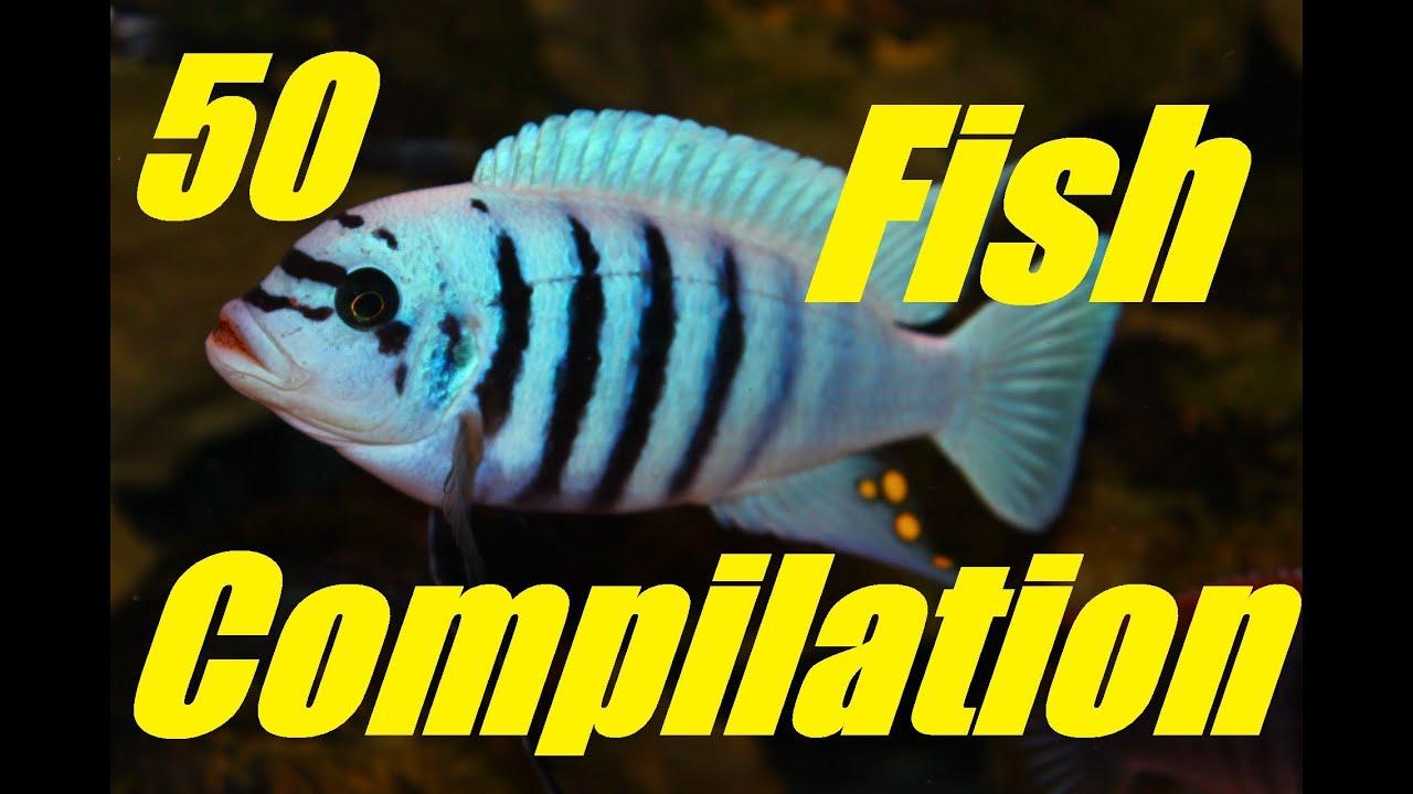 Beautiful aquarium fish compilation video youtube for H m fish count
