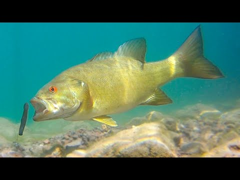 underwater-sight-fishing---how-to-catch-more-fish!
