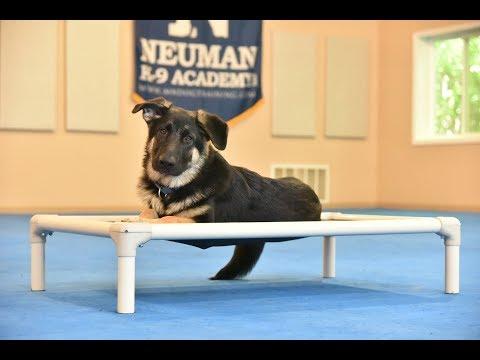 Thor (German Shepherd Dog) Puppy Camp Dog Training Video Demonstration