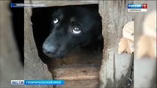Живодер заколотил собаку в будке и оставил на пустыре на Ставрополье