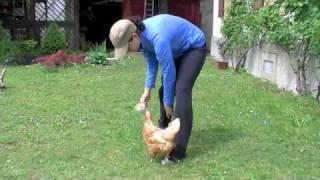 Méthode clicker: Education de poules