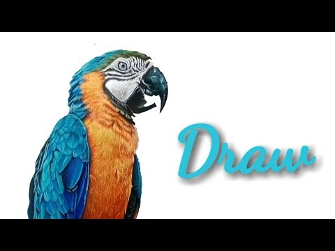 how-to-draw-parrot