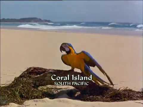 Papoušek a poklad - celý film, CZ dabing, komedie, dobrodružný, pro děti (1998) from YouTube · Duration:  1 hour 28 minutes 7 seconds