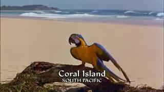 Papoušek a poklad - celý film, CZ dabing, komedie, dobrodružný, pro děti (1998)