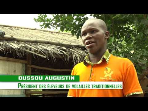 Youth Employment WAAPP Côte d'Ivoire   Producer of chicks