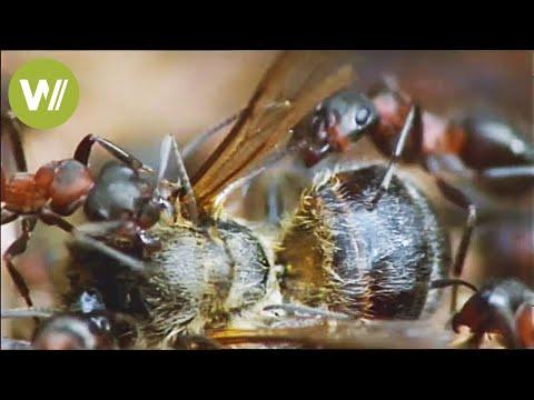 Como eliminar las hormigas del jard n doovi for Eliminar hormigas del jardin