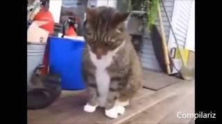 Танцующие кошки и коты  подборка под музыку