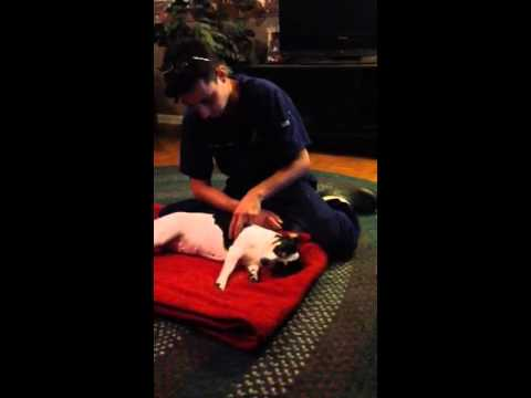 Canine Massage 1