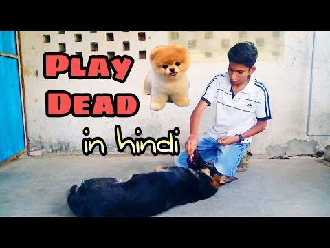 How to train dog to do play dead or bang bang in Hindi | Dog training in hindi |