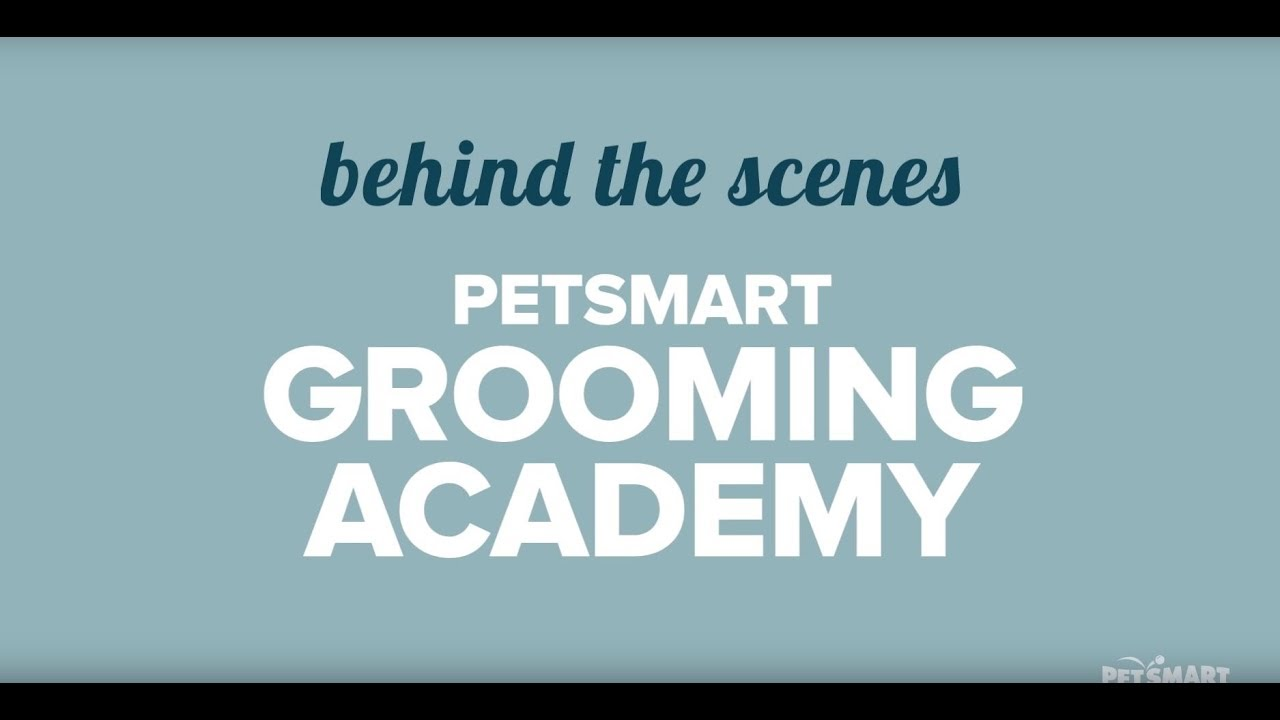 Behind the Scenes with the Stylists at PetSmart Grooming Academy