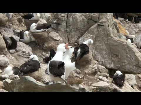 Antarctica Video 6