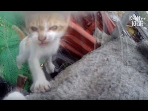 Bullied Cat Has Been Hiding Her Kittens? (Part 2) | Kritter Klub