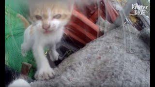 Bullied Cat Has Been Hiding Her Kittens? (Part 2) | Kritter Klub