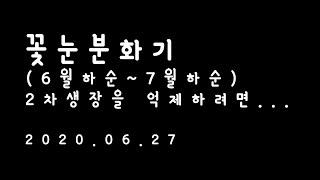 사과나무키우기 3년차(#24)꽃눈 분화기(6월하순~7월…