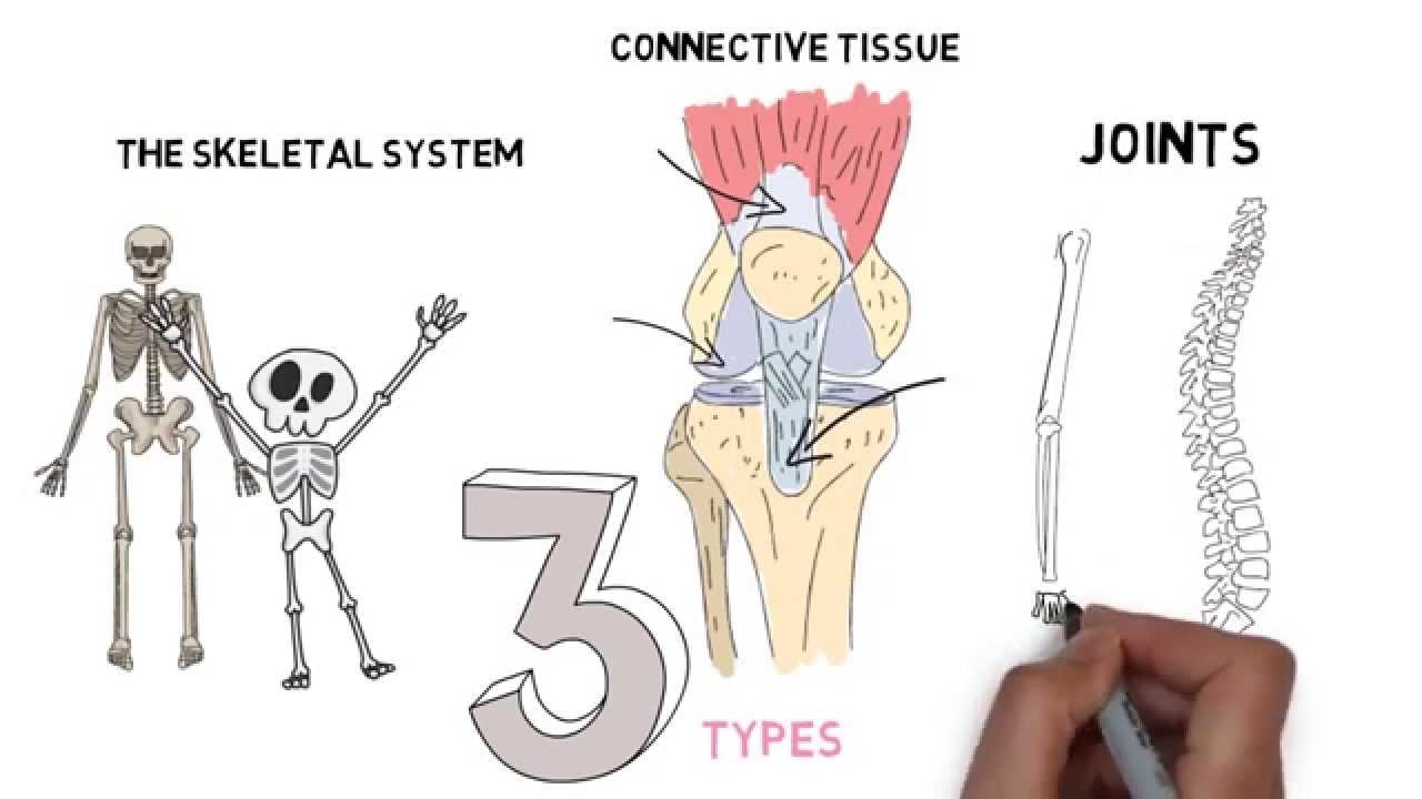 Gcse Biology Skeletal System Youtube