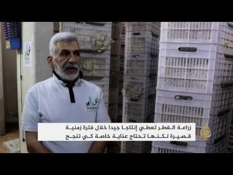 أهالي غوطة دمشق يلجؤون إلى تنفيذ مشاريع صغيرة  - نشر قبل 1 ساعة