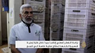 أهالي غوطة دمشق يلجؤون إلى تنفيذ مشاريع صغيرة