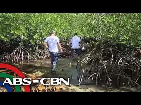 Pagkasira ng halos 1 ektaryang mangrove, nadiskubre sa Palawan