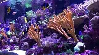 Vivid 400 Gallon Mixed Reef Aquarium 2015