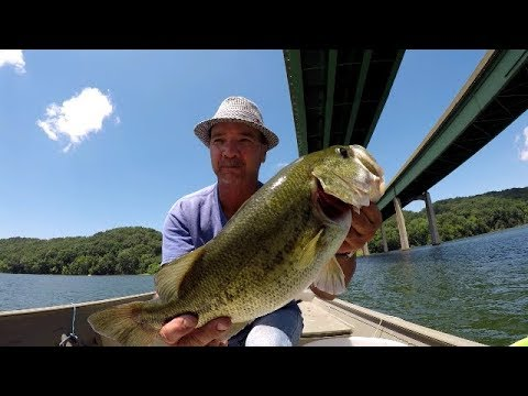 Live Shiners For Big Bass