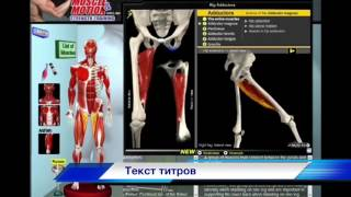 Биомеханика Внутренних Мышц Бедра. Анатомия и 3D анализ упражнений.