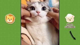 Funny Videos | Funny & Cute Cats and Dogs, Funny Pet Animals Video #1
