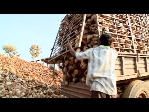 Coconut and communities: Coir cooperative moving up the value chain