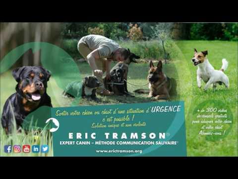 Var Resultat De L Education D Un Chien Ballon Par Eric Tramson Le Dresseur Canin Youtube