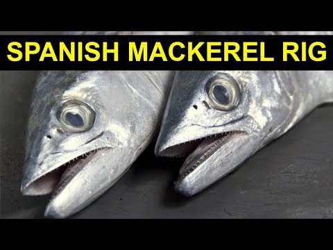 The Ultimate Spanish Mackerel Rig (Catches Mackerel Anywhere)