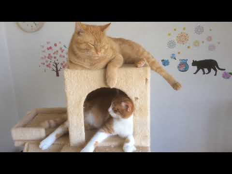 それぞれの場所で落ち着く猫 A cat that calms down at each place『保護猫るる らら物語』