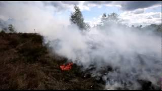 1,5 hectare van Groote Heide in Heeze afgebrand