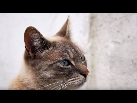 Cats Speaking Our Language - Cats Uncovered - BBC