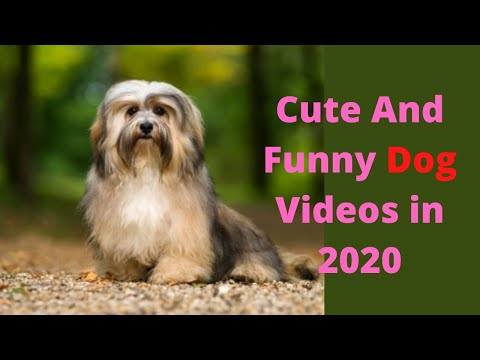 cute-and-funny-dog-videos-in-2020