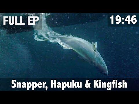 Saltwater Trifector Snapper Hapuku Kingfish