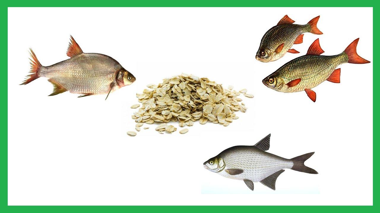 Как сделать геркулес для рыбалки 873